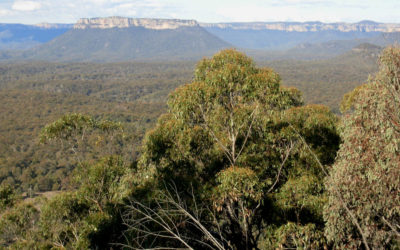 Pearsons Lookout